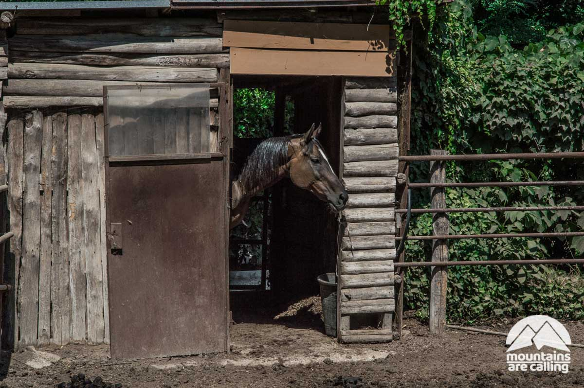 cavallo in una stalla