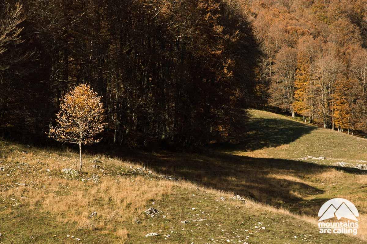 Piccolo faggio in autunno