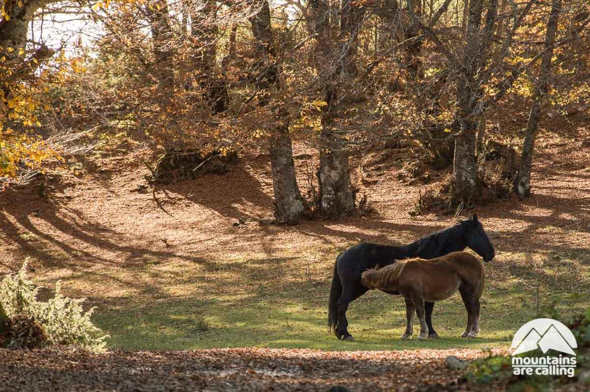 Immagine di una coppia di cavalli