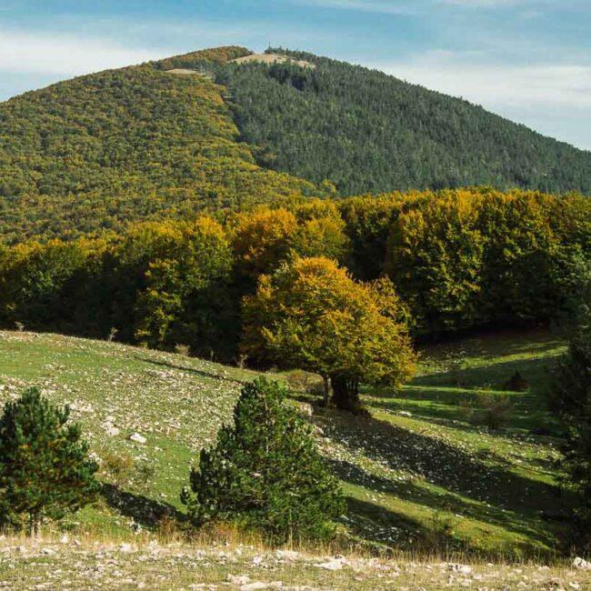 Immagine montagna immersa nei boschi