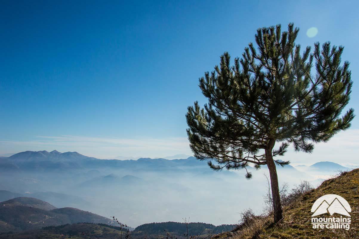 albero con panorama sulle montagne