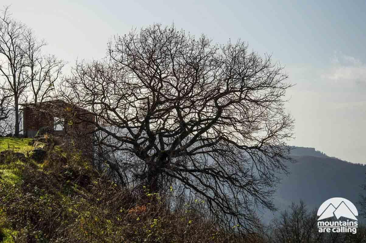 Paesaggio con albero e piccola casetta