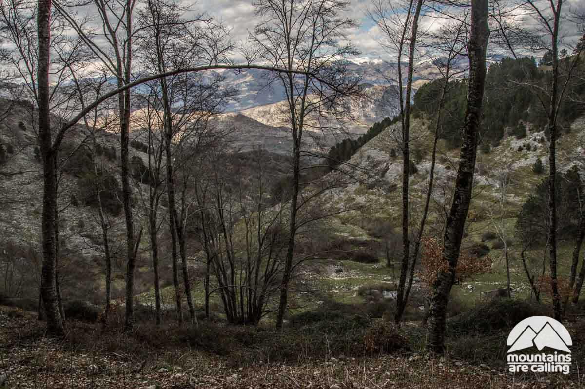 Bosco con sullo sfondo le montagne