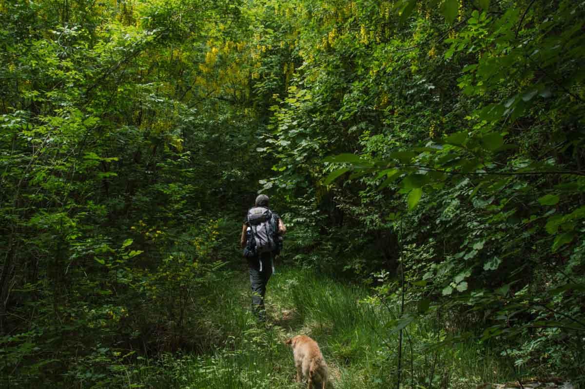 Escursionista che si addentra all'interno di un bosco