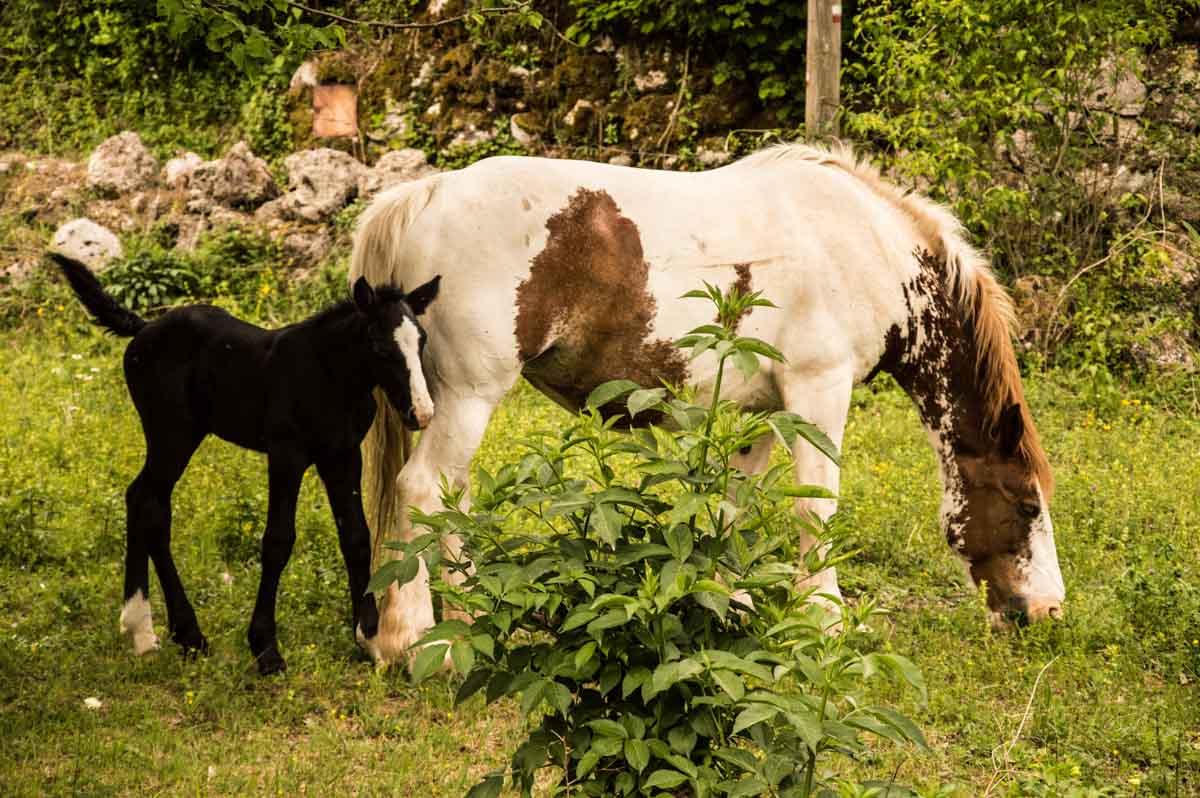 fotografia di cavalli