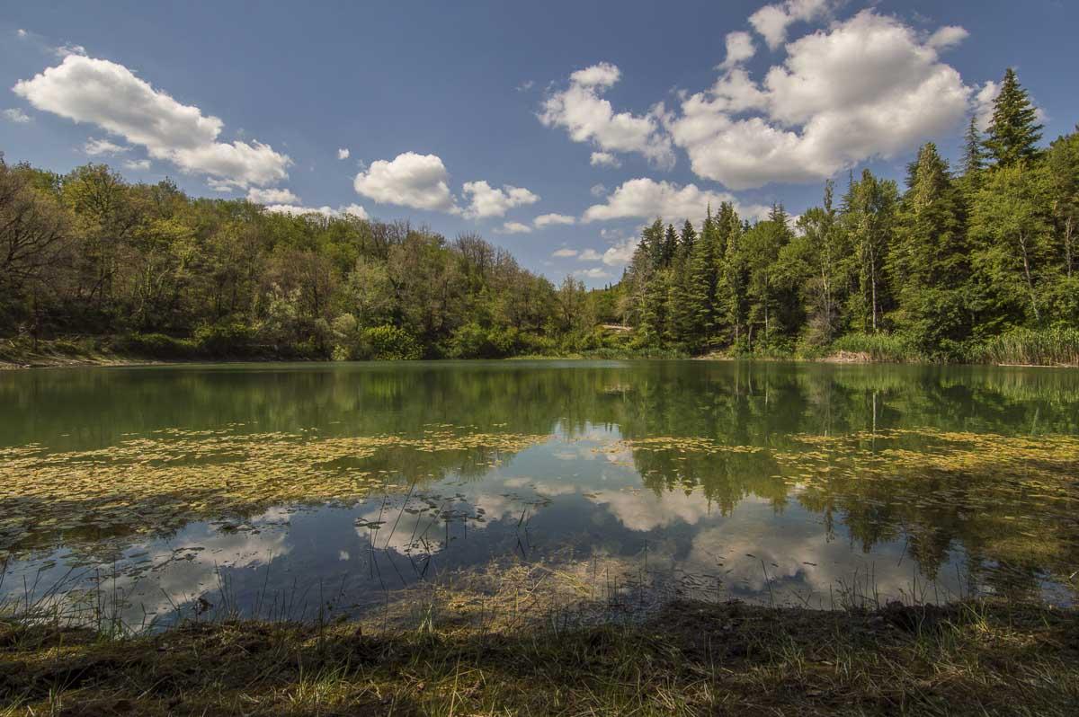 Immagine di un lago circondato da un bosco