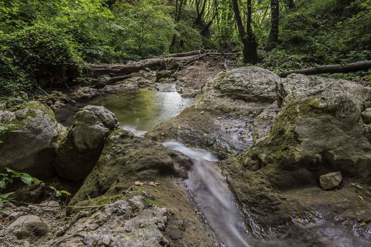 immagine di un selvaggio torrente in mezzo alla natura