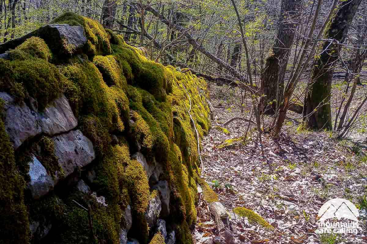 muretto a secco ricoperto da muschio verde nella foresta di camaldoli