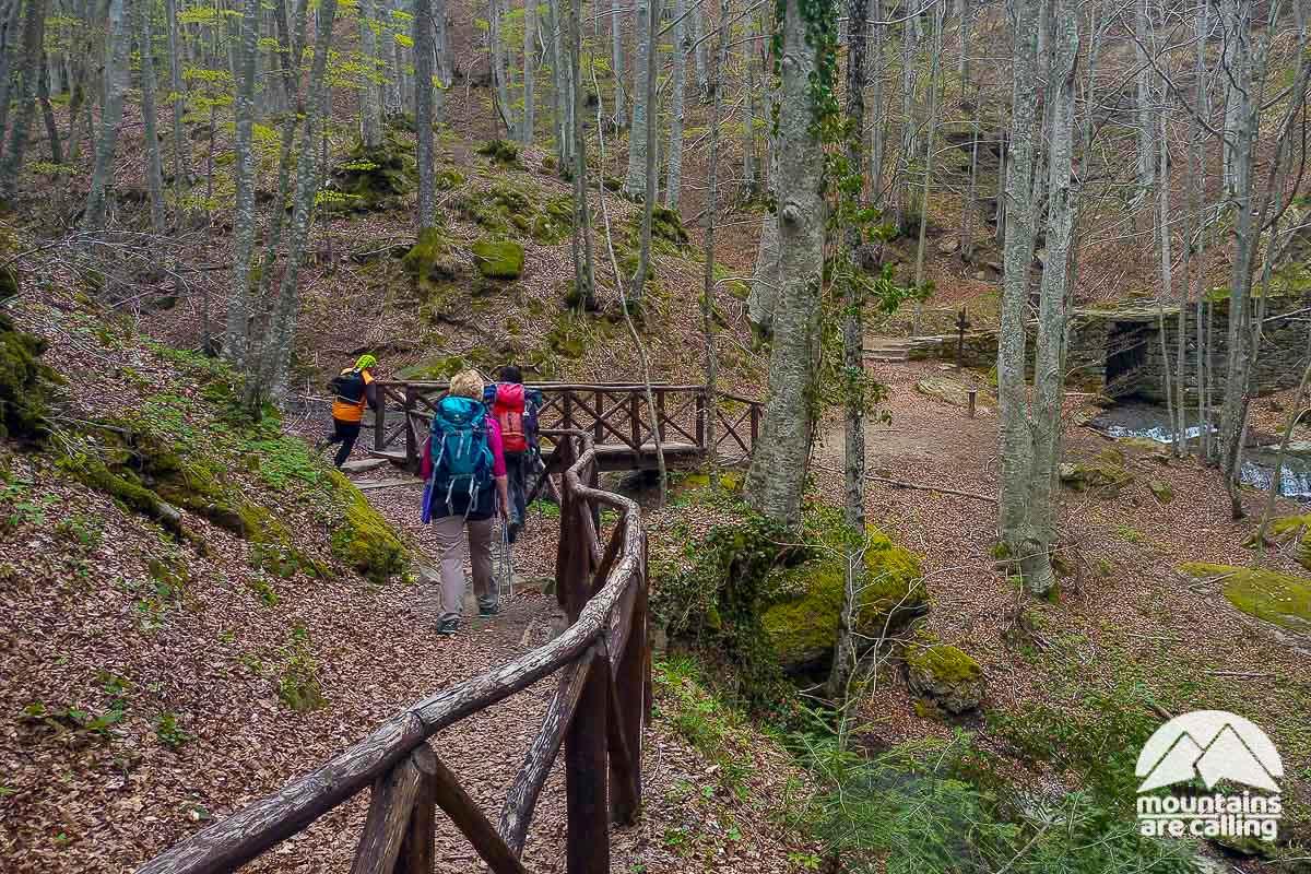 Escursionisti intenti a camminare nella foresta di Camaldoli