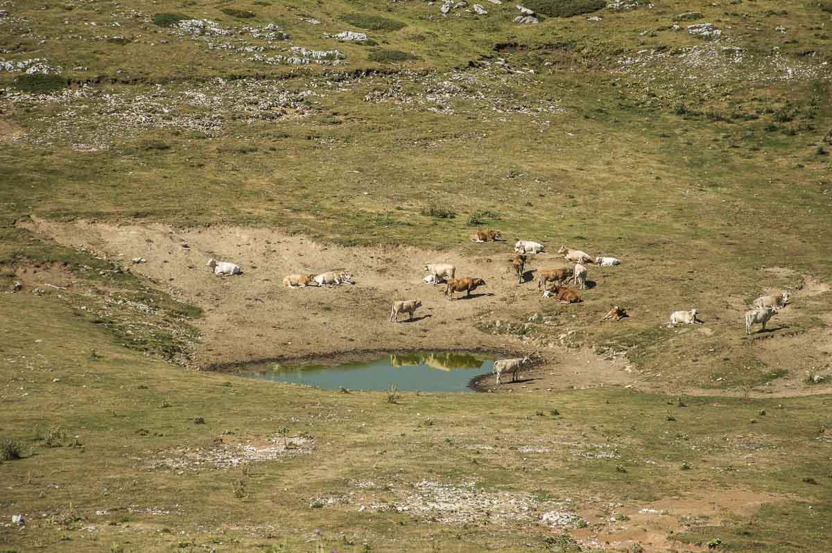 Piccolo laghetto davanti al Monte Cotento con delle mucche al pascolo