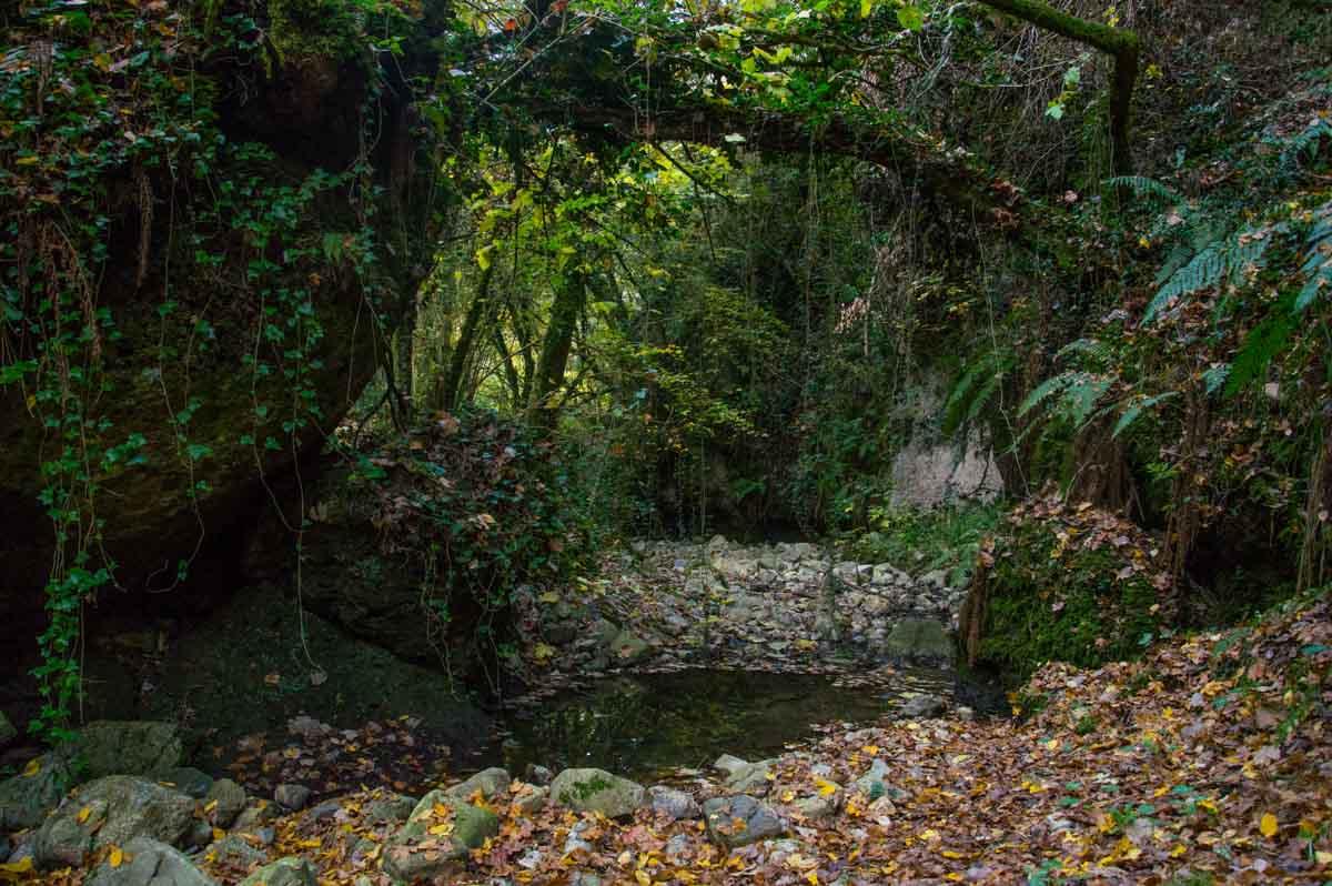 Forra con torrente e vegetazione molto fitta