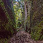 un lungo canyon di tufo che si inoltra nella fitta vegetazione