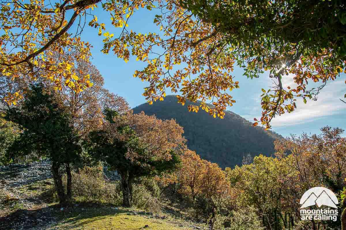 Bosco di cerri nel Parco Lucretili
