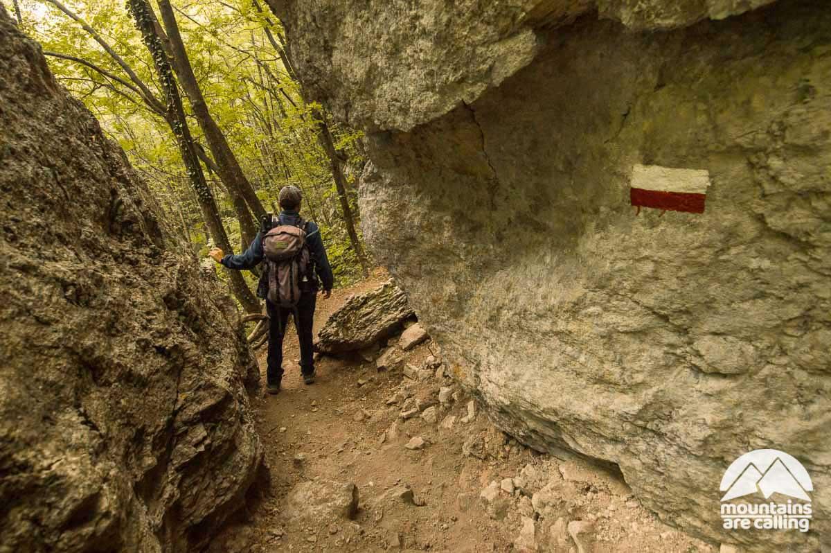 Escursionista che cammina lungo un senitero