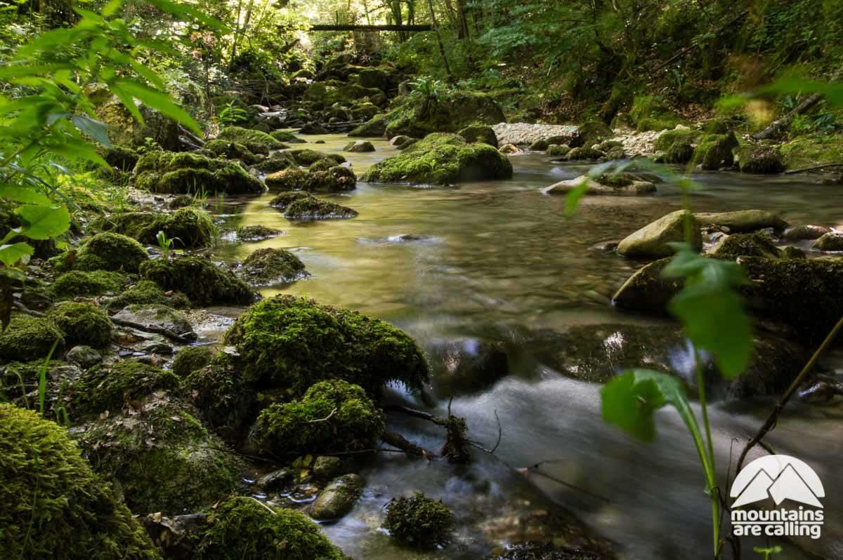 Immagine di un torrente all'interno di un bosco