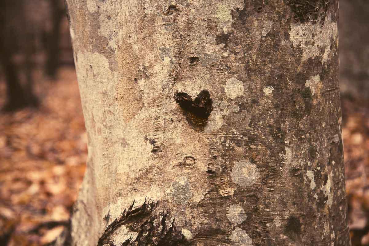 Corteccia di albero con un cuore inciso sopra