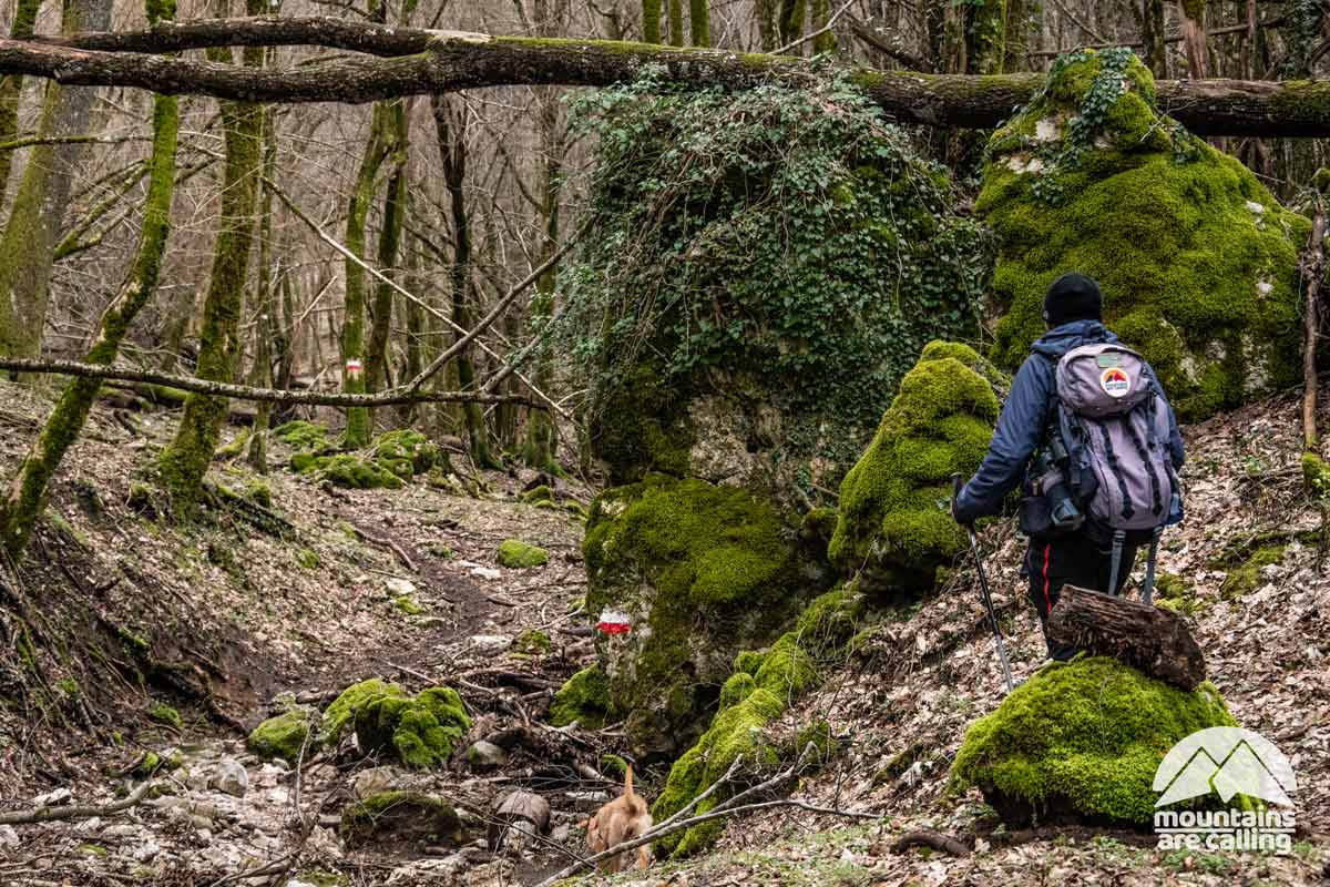 escursionista all'interno di un fitto bosco
