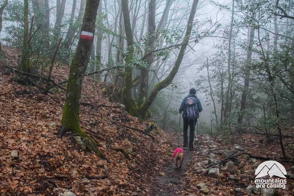 escursionista che cammina in un fitto bosco