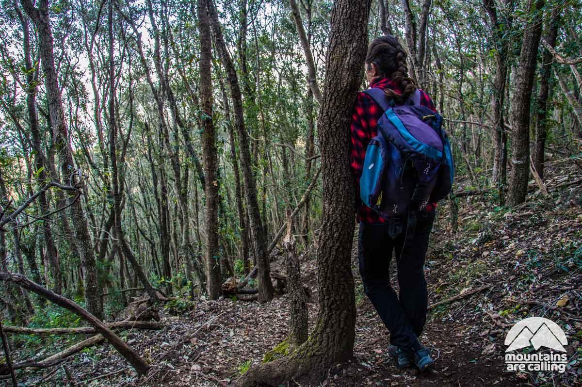 escursionista appoggiata ad un albero dentro una foresta