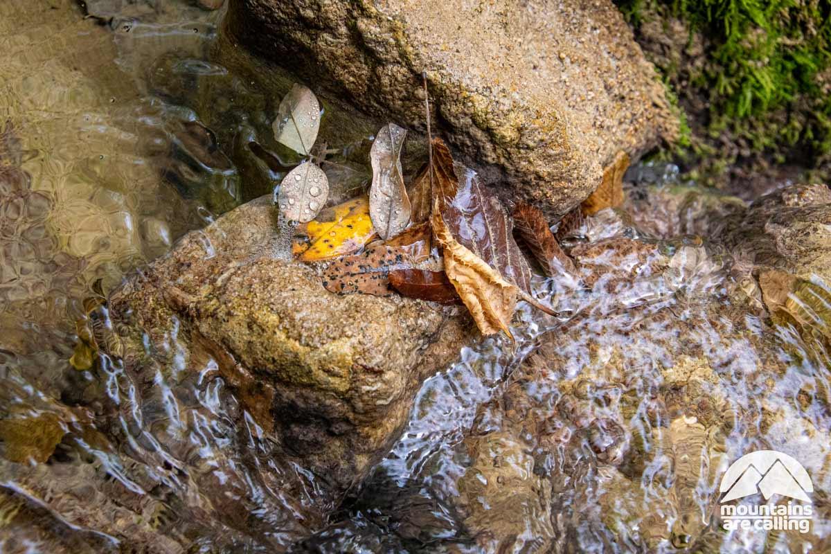 particolare macro di una foglia immersa nell'acqua
