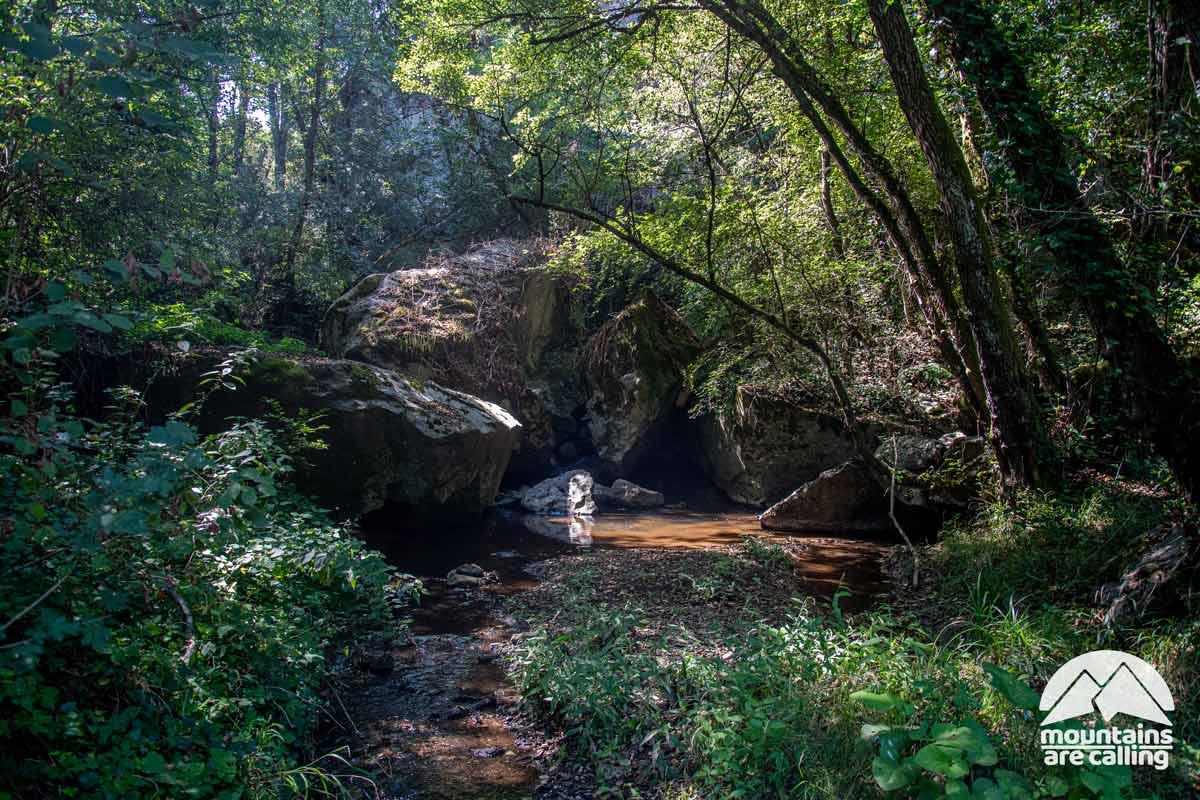 immagine di un torrente nel bosco